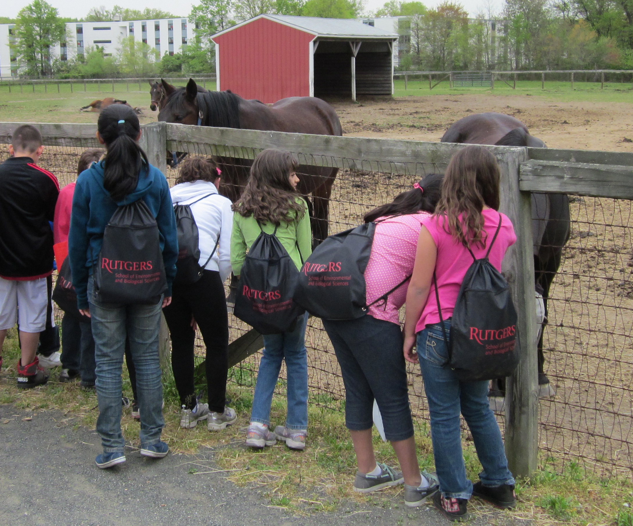 fourth-graders-with-horses