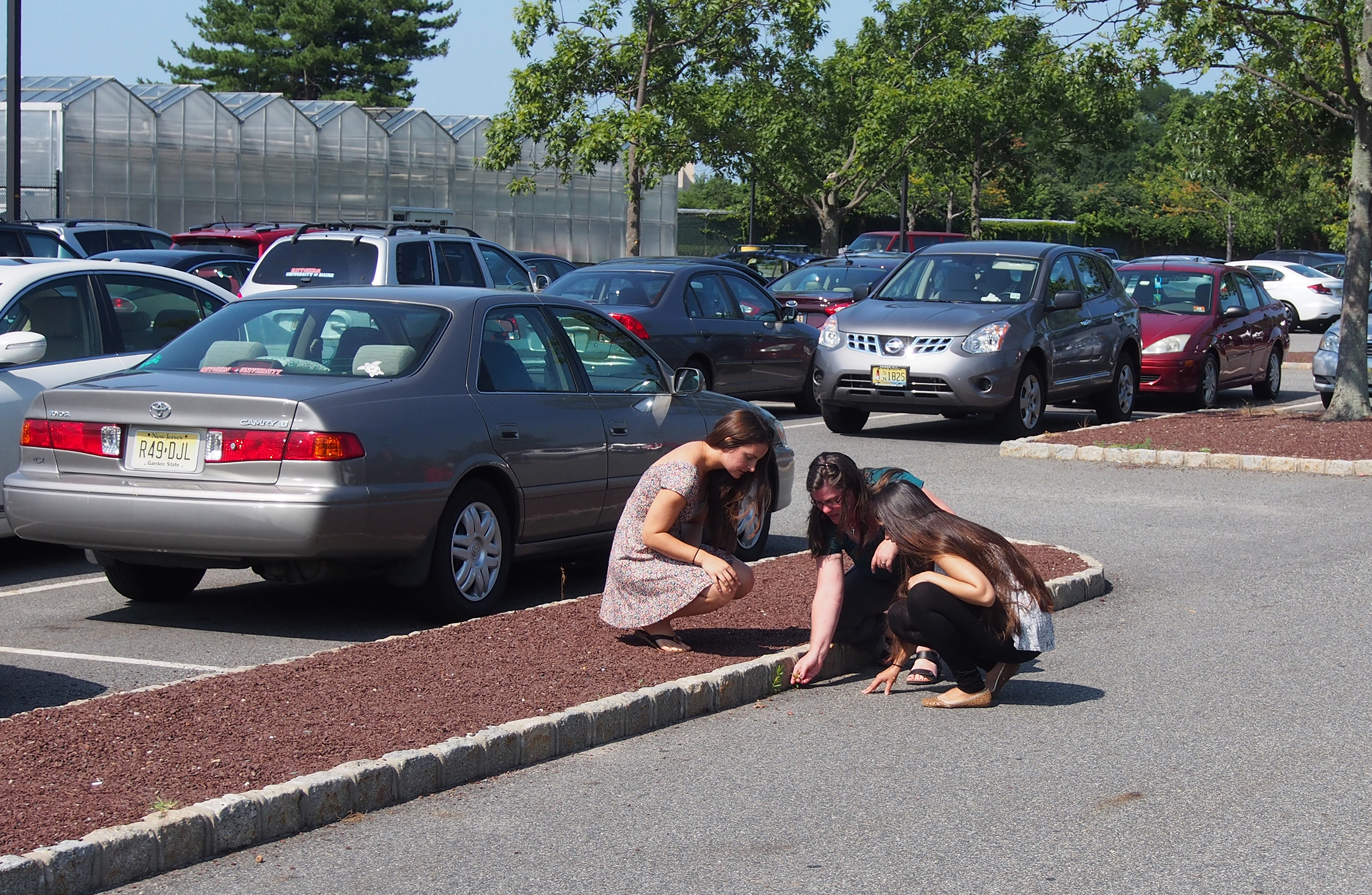 Weeds in Rutgers Parking Lot Project