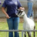 Students Host 41st annual Animal Show at Ag Field Day