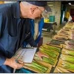 Patent Award Caps Seven Decades of Asparagus Breeding at Rutgers