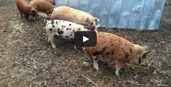 Video: Healing Quest - Grass Fed Movement