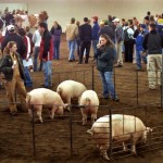 Rutgers Hosts 2013 Animal Science Competition Feb. 23