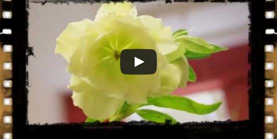 Video: Rutgers Home Gardeners School
