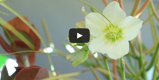 Video: The Science Behind Gardening