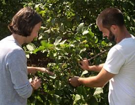 Photo: scientists examine tree