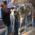 Photo: horse skeleton delivery