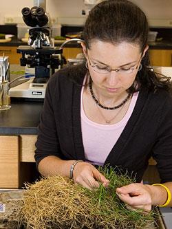 examining turf samples