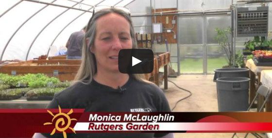 Watch Video: Rutgers Gardens Spring Flower Fair