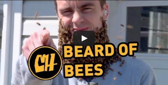 Video: 1 Million Facebook Likes = ONE GIANT BEE BEARD