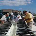 Barnegat Bay Gains New Crop of Oysters, Clams and Volunteers