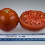 What's in Season from the Garden State: What's Behind the Tomato Name?