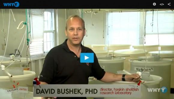 HaskinsvideoDave Bushek