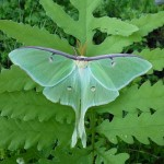 Rutgers Personnel by Day, Moth-ers by Night: Gearing up for Third Annual National Moth Week