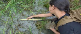 Nicole Khan and the Typhoon Haiyan sand layer within rice paddy soil ~1 km from the coastline