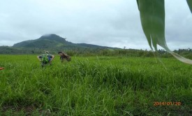 Jessica and Nicole coring a rice paddy in Basey, Philippines. Photo credit: Lea Janneli