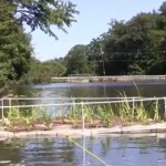 Reduce N & P in Lakes and Ponds with DIY Floating Wetland