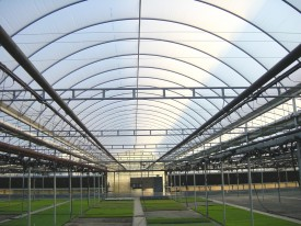 Kube-Pak in Monmouth County, the first commercial greenhouse to test the AIDPG system, currently uses it on 803,000 square feet (18 acres) of gutter-connected double-poly greenhouses.