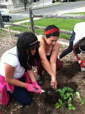 Carolina Mueller (R), demonstrates strawberry planting to Diana Guerra.