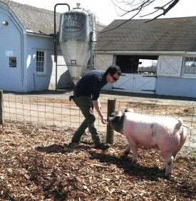 Wes training his pig in preparation for the 2013 Ag Field Day swine competition.