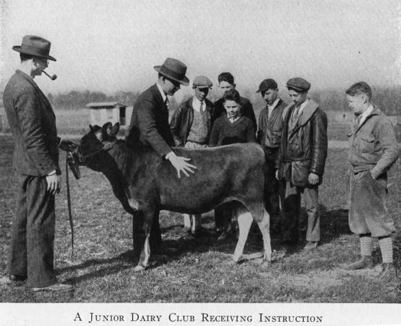 Junior Dairy Club receiving instruction