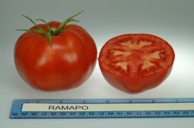 2006-09-11 Heirloom tomatoes 052