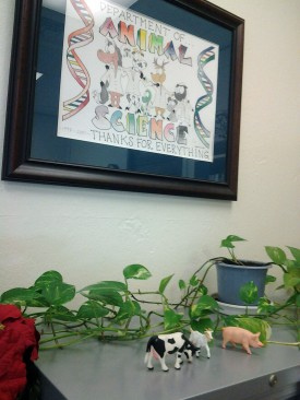 This drawing by Amanda, which she presented to the Department of Animal Sciences when she graduated in 2001, still graces the walls of the department.