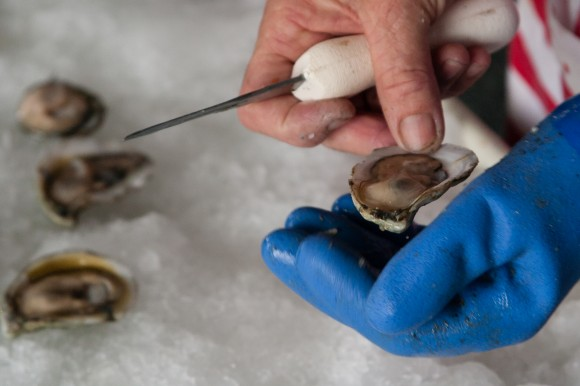 Fresh, tender Delaware Bay oysters from Cape May being shucked. Credit: Jack Rabin