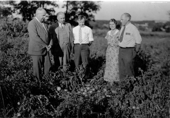Lyman Schermerhorn (left), breeder of the Rutgers tomato, in a field of tomatoes. Circa 1930s.