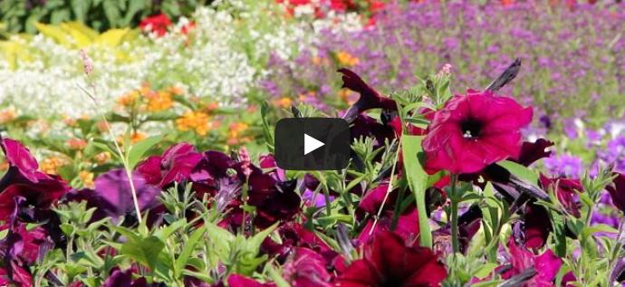 Video: Rutgers Gardens Offers Relaxing Getaway