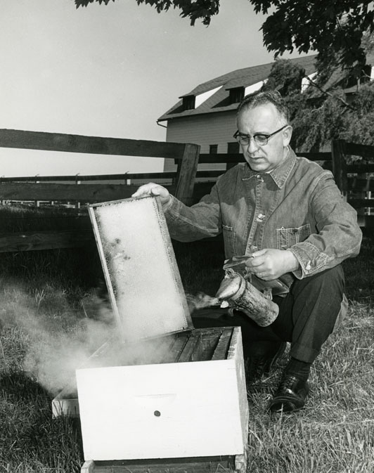 Secretary of Agriculture Phillip Alampi with bees on his farm in Pennington, New Jersey. Date: 1966. Source: Department of Agriculture Photograph collection, NJ State Archives