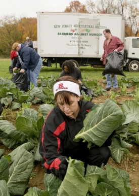 "What happens to the farm produce that doesn't make the grade? One use is to supply local food banks by ""gleaning"" the produce left in the field."