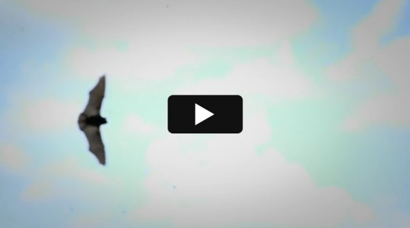 Video: Fight for Flight: The Battle Against White Nose Syndrome