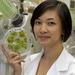 Diana Cheng, formerly NIH postdoctoral fellow in Raskin's Lab, displays lettuce cultures.