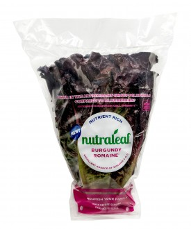 Rutgers Scarlet Lettuce is being first introduced into the market by Coastline Family Farms under their NutraLeaf™.