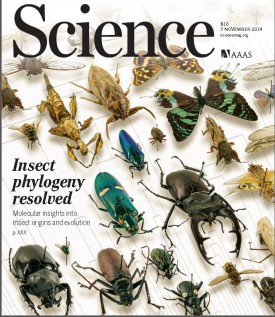 Cover of the Nov. 7 issue of the journal Science features scientists' mapping of the evolution of insects.