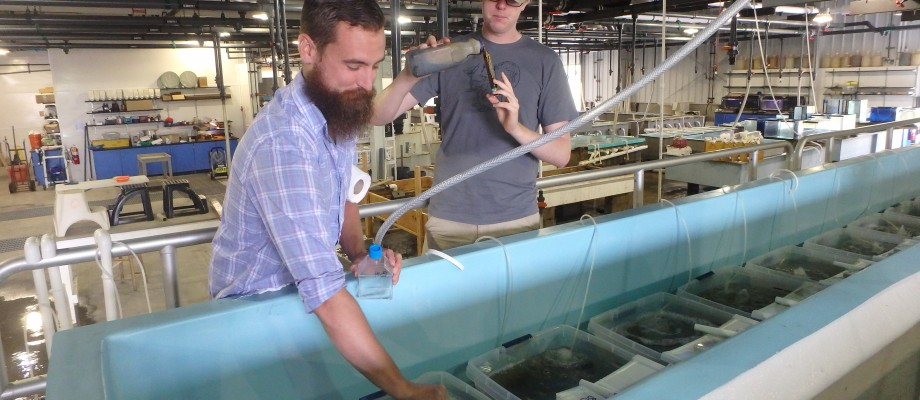 Student Interns Tackle Oyster Disease Ecology at Haskin Lab