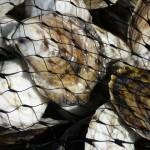 Delaware Estuary Summit Charts Course for Aquaculture in the Region