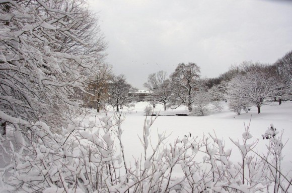 Cook campus in the snow. Photo by Penny Carlson