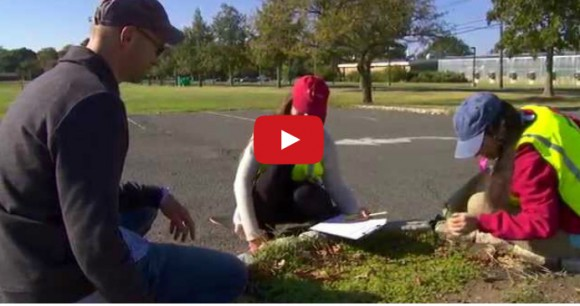 Video: Extreme Weeds of Parking Lots : Plants Are Cool, Too! Episode 6