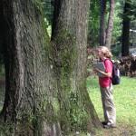 Eliana Geretz '15: Moss, the Whimsical and Overlooked Flora