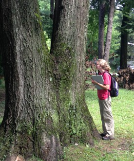 Eliana Geretz samples mosses from Pastorius Park, Philadelphia