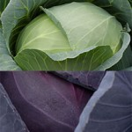 Jersey Fresh green and red cabbage.