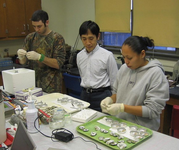 Ximing Guo supervises students learning to extract DNA from oysters in his lab.