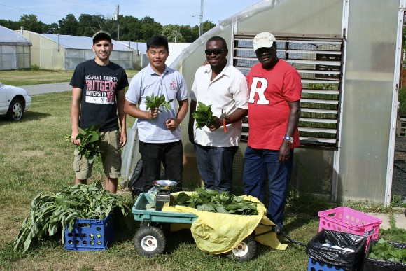 Entrepreneurship Agriculture Program interns at Hort Farm 3. L-R: James Smith (SEBS '16), Arlan Rodeo (PSM '16), Andrew Boameh-Agyekum (PSM '16), Professor Albert Ayeni.
