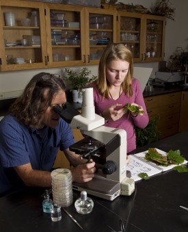 At Rutgers NJAES Plant Diagnostic Clinic, Rich Buckley, M.S., and former plant pathology student intern Amanda MacDonald, examine diseased grape leaves, comparing spores in plant sap under the microscope against a disease key. Photo by Jack Rabin