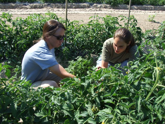 Jenny Carleo (r), RCE agricultural agent of Cape May County, discusses tomato crop management with farmer Jen Gleason of Hand's Stand Market in Rio Grande, NJ.