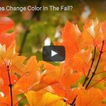 Ask the Rutgers Expert: Why Do Leaves Change Color in the Fall? (Video)