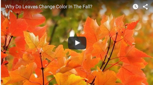 Video: Why Do Leaves Change Color in the Fall?