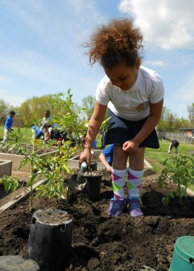Growing healthy food at the West Belmar Elementary School in Wall Township.
