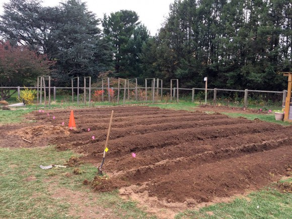 Raised beds prepared for student farm production at Rutgers Gardens.